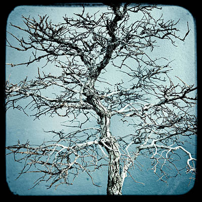 Photograph - Bonsai by Gary Heller