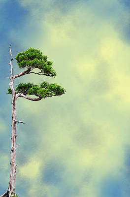 Bonsai Glow Art Print by John Haldane