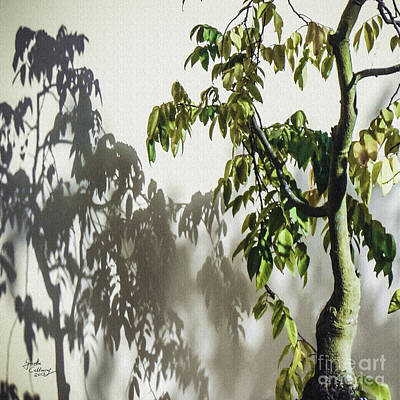 Photograph - Bonsai Shadows Morikami Gardens by Ginette Callaway