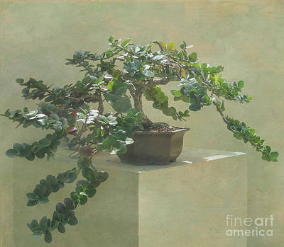 Bonsai Tree Art Print by Arlene Carmel