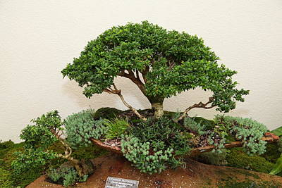State Photograph - Bonsai Treet - Us Botanic Garden - 01131 by DC Photographer