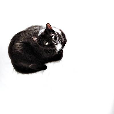 Le Cat Photograph - Booboo by Natasha Marco