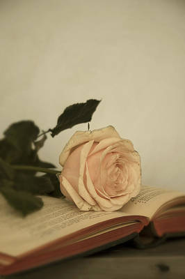 Photograph - Book And Rose by Ethiriel  Photography