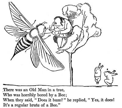 Bumblebee Drawing - Book Of Nonsense, 1846 by Granger