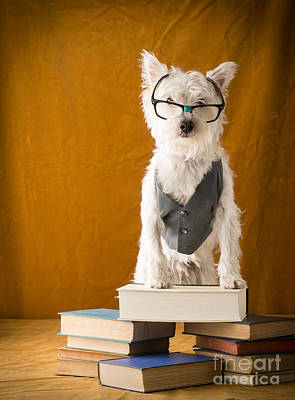Library Photograph - Bookish Dog by Edward Fielding