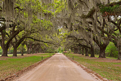 Photograph - Boone Hall Plantation by Bernard Chen
