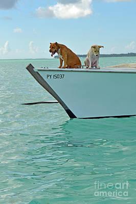 Digital Art - Bora Bora Dogs by Eva Kaufman