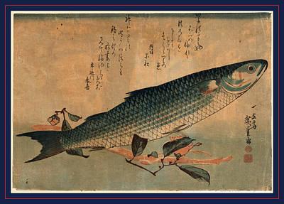 Bora Zu, Striped Mullet Bora. Between 1833 And 1836 Art Print