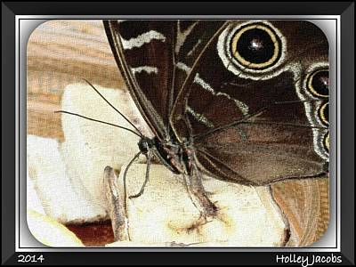 Digital Art - Borboleta by Holley Jacobs