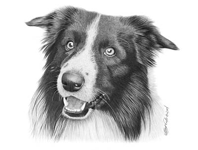 Drawing - Border Collie -030 by Abbey Noelle