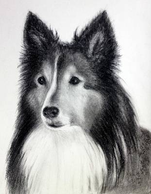 Commission Work Drawing - Border Collie 2 by Sun Sohovich
