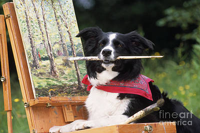 Photograph - Border Collie At Painting Easel by John Daniels