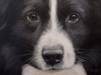 Charcoal Landscape Drawings Painting - Border Collie Close Up by John Silver