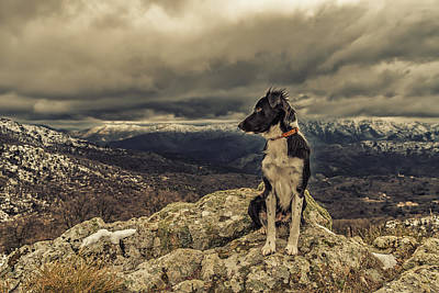 Mistletoe - Border Collie dog in snow covered mountains by Jon Ingall