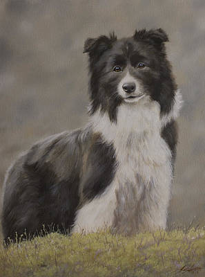 Charcoal Landscape Drawings Painting - Border Collie Portrait Viii by John Silver