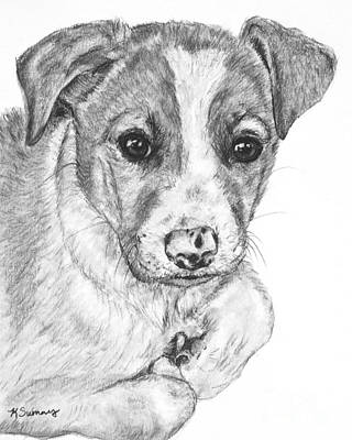 Drawing - Border Collie Puppy Drawing by Kate Sumners
