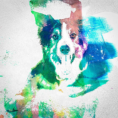 Watercolor Pet Portraits Photograph - Border Collie - Wc by Joye Ardyn Durham