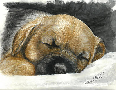Puppy Mixed Media - Border Terrier Puppy Nap by Daniele Trottier