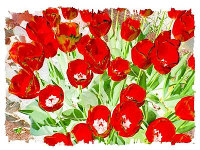 Digital Art - Bordered Red Tulips by Will Borden