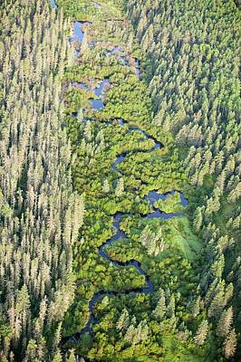 Boreal Forest Print by Ashley Cooper