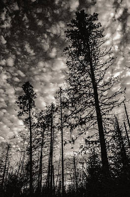 Photograph - Boreal Forest At Dusk by Arkady Kunysz