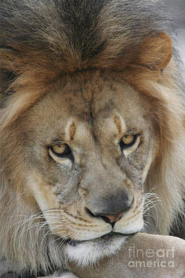 African Photograph - Bored #2 by Judy Whitton