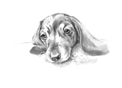 Drawing - Bored. Little Dachshund by Alena Nikifarava