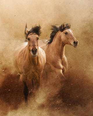 Buckskin Horse Photograph - Born From Dust by Ron  McGinnis
