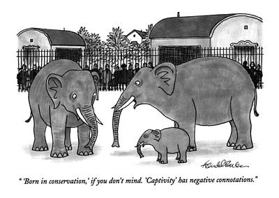 Zoo Drawing - 'born In Conservation by J.B. Handelsman
