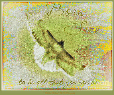 Photograph - Born To Be Free by Bobbee Rickard