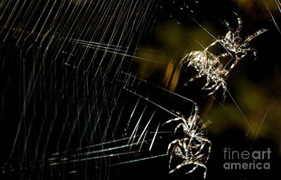 Photograph - Borus The Spider by Jeannette Hunt