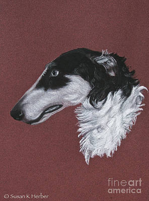 Drawing - Borzoi by Susan Herber