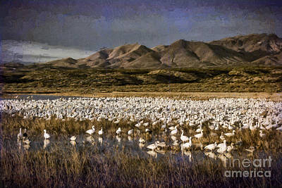 Digital Art - Bosque Del Apache by Georgianne Giese