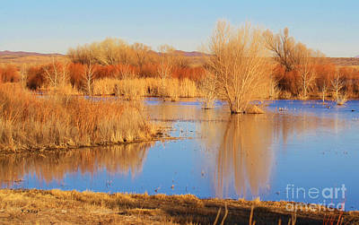 Photograph - Bosque Del Apache Nwr In Nm by Roena King