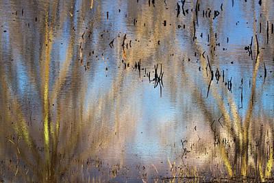 Car Photos Douglas Pittman - Bosque Reflections by Diana Powell
