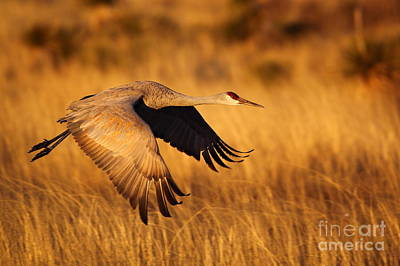 Photograph - Bosque Sandhill  by Bill Singleton