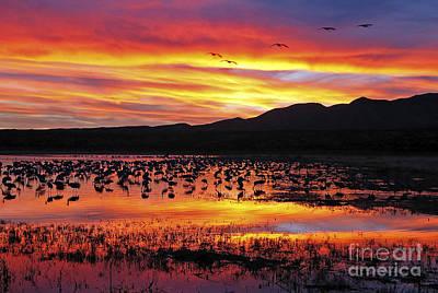 Photograph - Bosque Sunset II by Steven Ralser