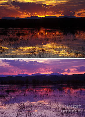 Photograph - Bosque Sunsets by Steven Ralser