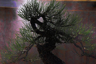 Photograph - Boss Bonsai by Brian Davis