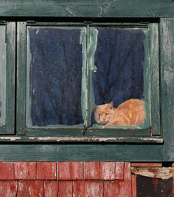 Maine Old Barn Photograph - Boss Of The Barn by Susan Capuano