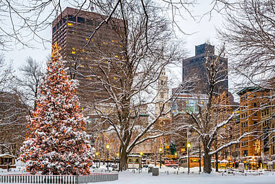 Photograph - Boston Christmas Tree by Susan Cole Kelly