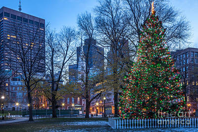 Photograph - Boston Common Christmas Tree by Susan Cole Kelly