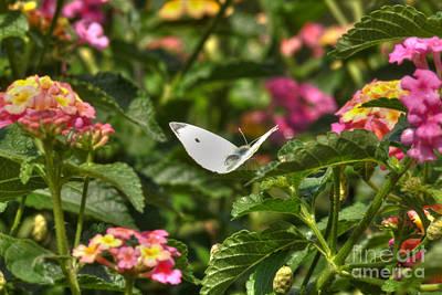 Garden Photograph - Boston Moth by Deborah Smolinske