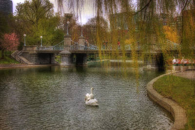Photograph - Boston Public Garden Swans by Joann Vitali