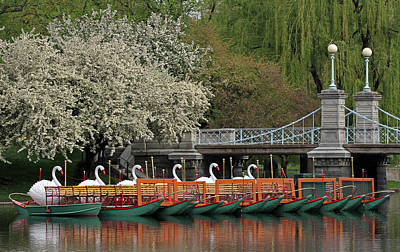 Photograph - Boston Swan Boats  by Juergen Roth