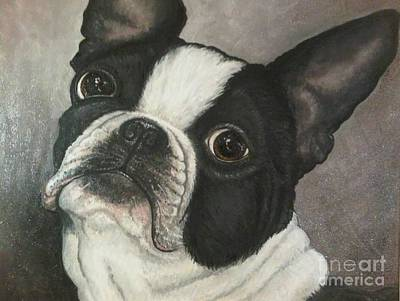 Bulldog Oil Painting - Boston Terrier by Ana Marusich-Zanor