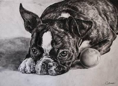 Boston Terrier Dog Original