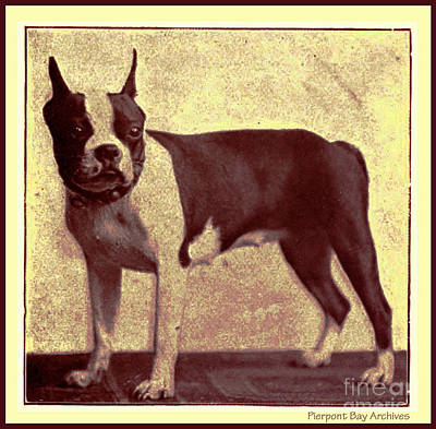 Artful And Whimsical Digital Art - Boston Terrier by Pierpont Bay Archives