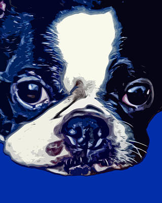 Cute Dogs Digital Art - Boston Terrier Pop Art 2 by David G Paul