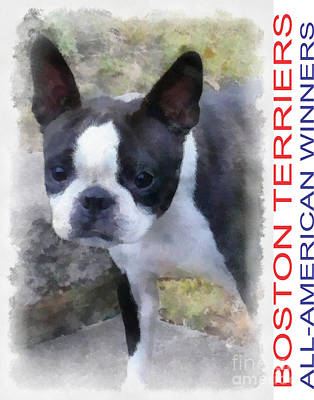 Boston Terrier Poster Original by Betsy Cotton